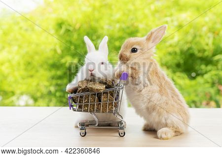 Easter Holiday Bunny Animal And Shop Online Concept.two Adorable Baby Rabbit White, Brown Pushing To
