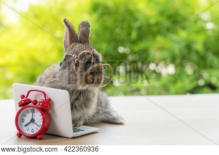 Easter Holiday Animal, Technology E-learning Concept. Baby Bunny Brown And Grey With Small Laptop An