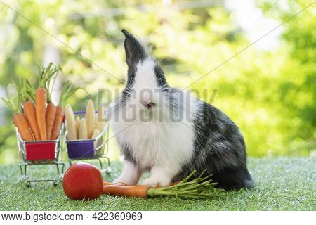 Easter Holiday Bunny Animal And Shop Online Concept. Adorable Baby Rabbit Black, White With Shopping