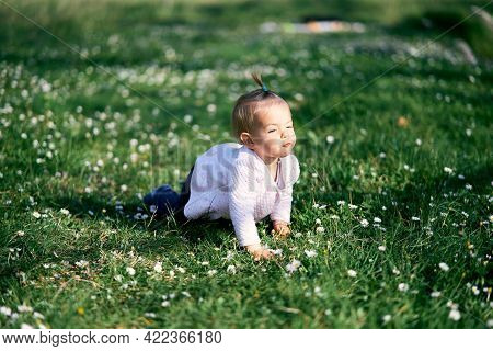 Cute Little Girl With A Ponytail On Her Head Crawls On A Green Lawn Among White Daisies