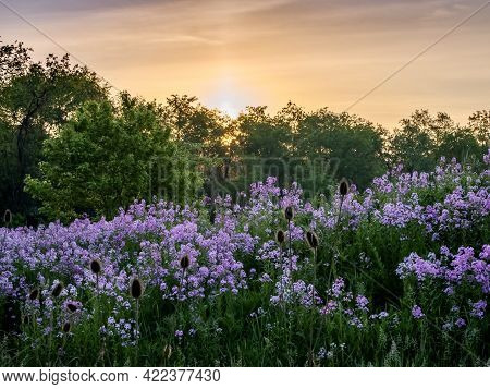Landscape Scenery Of The Sun Rising Over A Hillside Illuminating A Field Of Purple Wildflowers, Dame