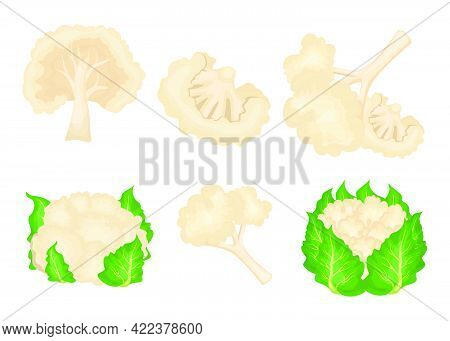 Cartoon Cauliflower Vector Illustrations Set. Whole Cabbage With Leaves, Pieces Of Healthy Vegetable