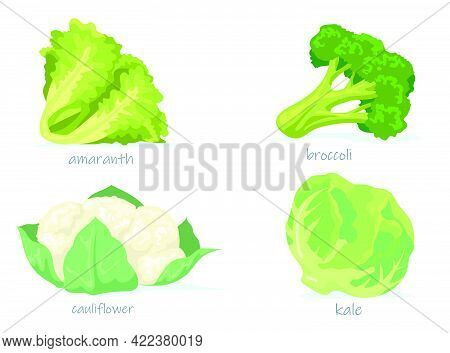 Variety Of Cabbage Flat Pictures Collection. Cartoon Green Broccoli, Kale, Cauliflower And Amaranth