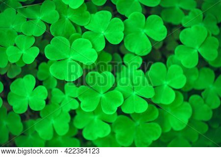 Green clover leaves closeup. Nature background