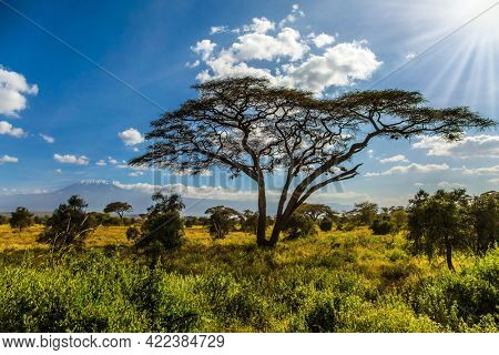 Park Amboseli is a magnificent biosphere reserve at the foot of the famous Kilimanjaro mountain. Savanna with rare bushes and desert acacia. The concept of active, exotic, ecological and photo tourism