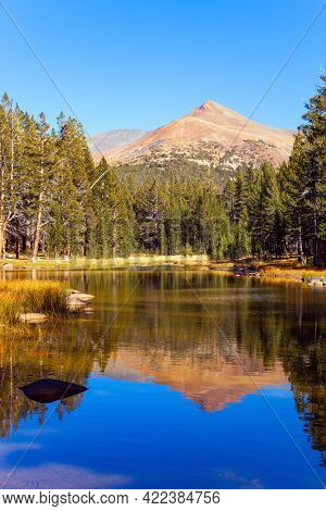 The Tioga Road and Pass in Yosemite Park. Forest and mountain are reflected in the smooth water of the lake. Sunrise. USA. North America
