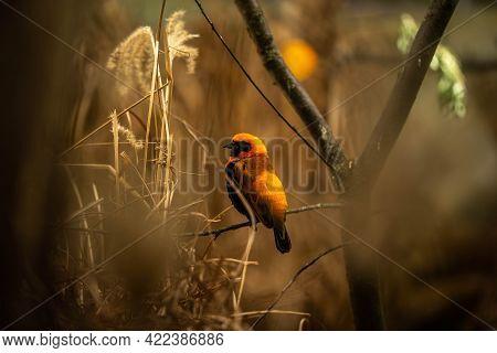Beautiful Weaver Bird Sitting On A Branch