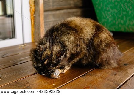 Cat With A Caught Dead Bird Under Its Paw. Kitty Killed The Sparrow. Wild Animal Instinct. Eating Th
