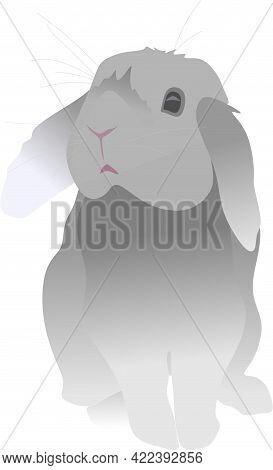 The Rabbit Is Cute. Big-eared Animal, Rabbit. Big-eared Rabbit. Gray Hare, Orange, Purple.