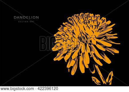 Vector Illustration Of A Dandelion Flower Isolated On A Black Background. Modern Wall Art, Poster Or