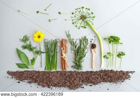 Seasonal Herb Salad Ingredients With Dandelion Flower Made From Chives, Parsley And Spring Onions