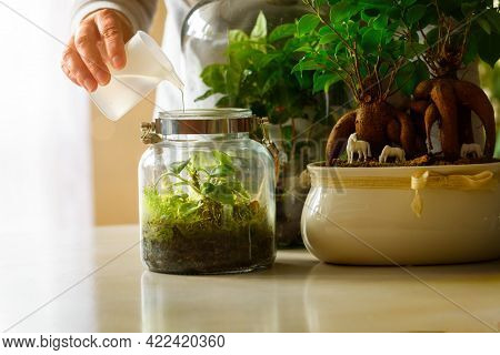 Caring for plants. Watering a small forest in a jar, a trendy concept in recent years.