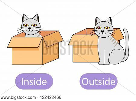 The Cat Sits Inside The Box And Next To The Box. The Concept Of Children Learning Opposite Prepositi