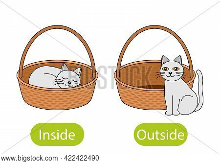 The Cat Sits Inside The Box And Next To The Basket. The Concept Of Children Learning Opposite Prepos