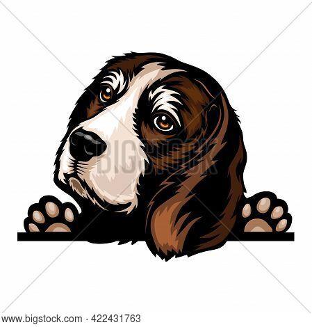 Beagle - Color Peeking Dogs - Breed Face Head Isolated On White