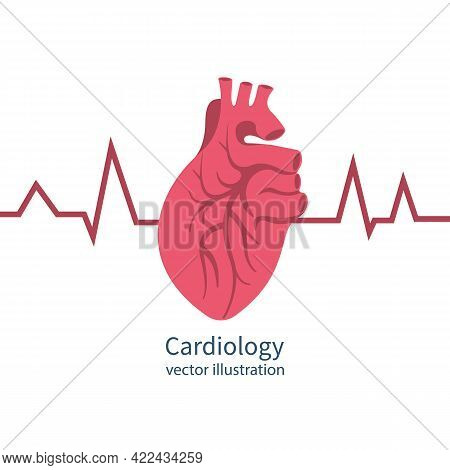 Cardiology Concept. Human Heart Red Heartbeat With Life Line, Symbol Healthcare. Medical Background.