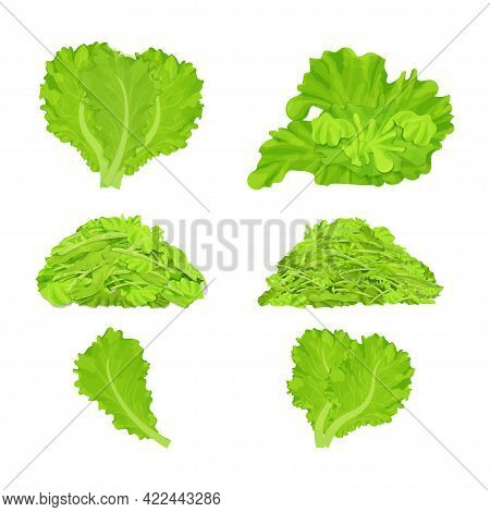 Set Of Different Lettuce Leaves, Shredded Pile Isolated On White Background. Realistic Flat Cartoon