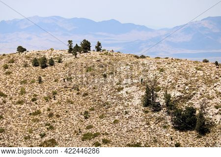 Arid Mountain Ridge Covered With Sage Plants And Pine Trees Where The Mojave Desert And Alpine Conif