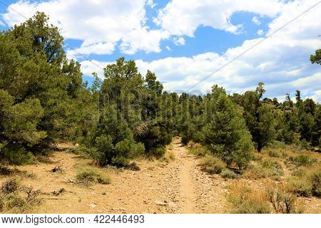 Hiking Trail On An Alpine Plateau Surrounded By A Pinyon Pine Forest Taken On The Pacific Crest Trai