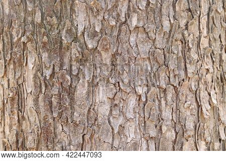 Surface Of Brown Dried Bark Of A Tree.