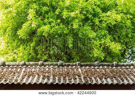 Dry Leaf On Roof Top