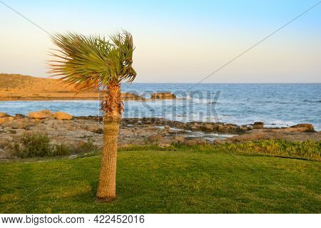 A Lonely Palm Tree On The Beach On A Windy Evening