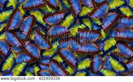 Blue And Yellow Abstract Texture Background. Butterflies Morpho. Wings Of A Butterflies Morpho. Flig