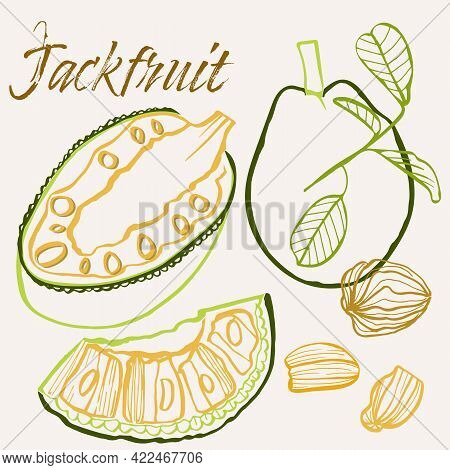 Jackfruit Line Art Hand-drawn Multicolor Modern Vector Illustration. Colorful Line Art Exotic Fruit