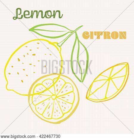 Lemon Line Art Hand-drawn Multicolor Modern Vector Illustration. Colorful Line Art Exotic Fruit Desi