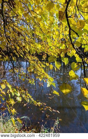 The Forest Lake. Autumn Forest. The Sun's Rays Through The Trees. A Walk Through The Autumn Forest.