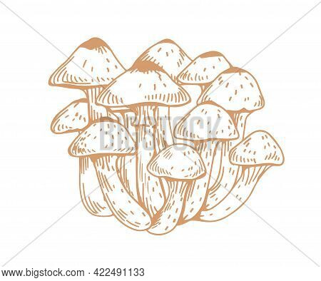 Outlined Drawing Of Armillaria, Honey Mushroom, Or Fungus. Bunch Of Contoured Edible Forest Fungi. H