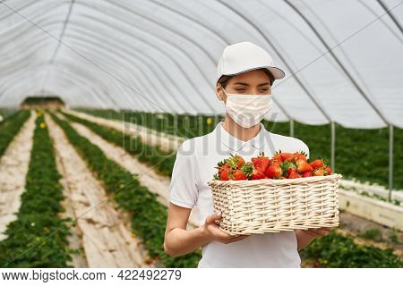 Adorable Caucasian Woman In Face Mask And White Cap Carrying Wicker Basket Full Of Freshly Picked St