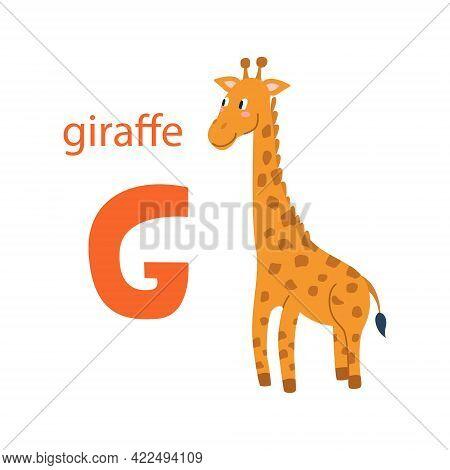 Cute Giraffe Card. Alphabet With Animals. Colorful Design For Teaching Children The Alphabet, Learni