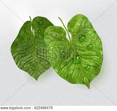 Tropical Leaves With Drops Of Water, Rain. A Tropical Element In The Style Of Realism, Isolated On A