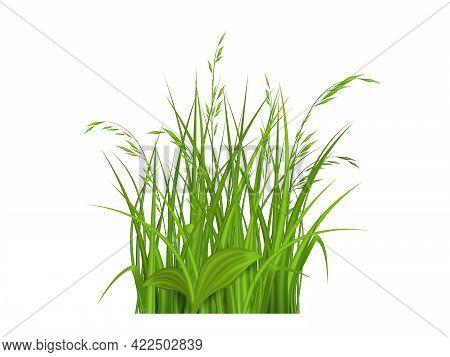 Spring Grass Seamless Pattern 3d Realistic Vector. The Bush Grass.vector Illustration.