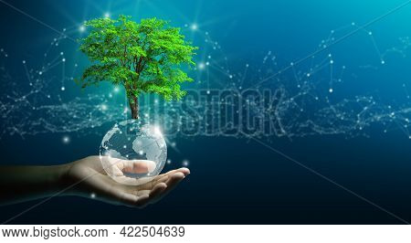 Hand Holding Growing Tree On Crystal Ball With Technological Convergence Blue Background. Innovative