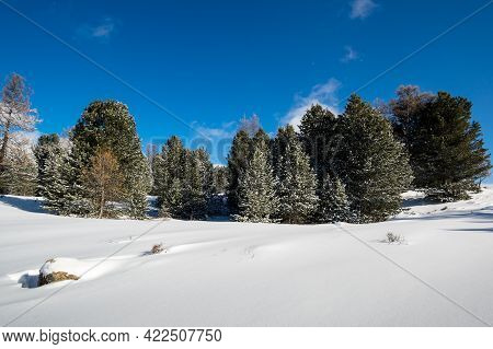 View Of The Forest In Altay Mountains In The Winter, Siberia, Russia