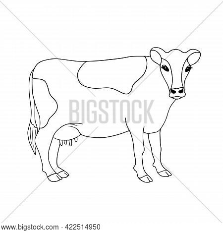 Outline Vector Standing Cow. Series Of Livestock, Farm Animals. Hand Drawn Line Art Sketch, Doodle,