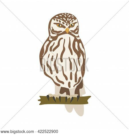 Perching Owl Bird With Broad Head And Sharp Talons Having Upright Stance Vector Illustration