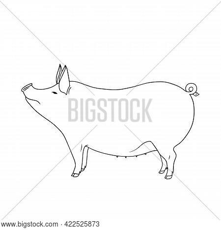 Outline Vector Standing Pig. Series Of Livestock, Farm Animals. Hand Drawn Line Art Sketch, Doodle,