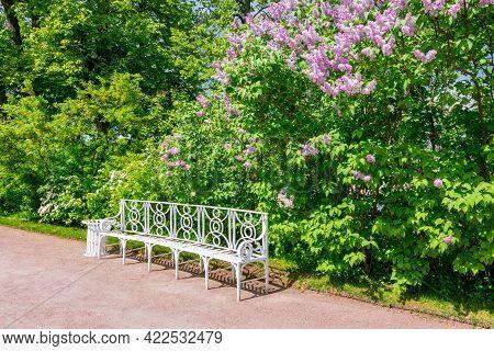 Blooming Lilac And Bench In Catherine Park In Spring, Tsarskoe Selo (pushkin), Saint Petersburg, Rus