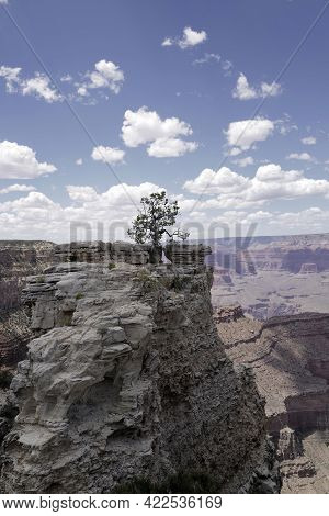 Beautiful Tree On Cliff Of Grand Canyon. Scenic Panorama Of Grand Canyon National Park. View Arizona