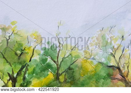 Summer Sunny Forest With Watercolors. Beautiful Trees. Watercolour Illustration Of Mixed Forest And
