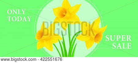 Only Today Super Sale Banner Design With Three Daffodils In Round Frame On Green Background. Typed T
