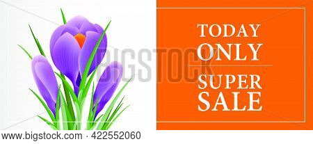 Today Only Super Sale, Thirty Percent Off Banner Template With Violet Snowdrop On Orange And Grey Ba