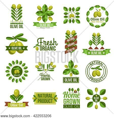 Flat Label Set Of Natural Olive Oil Advertising With Olive Tree Branches And Olives  Isolated Vector