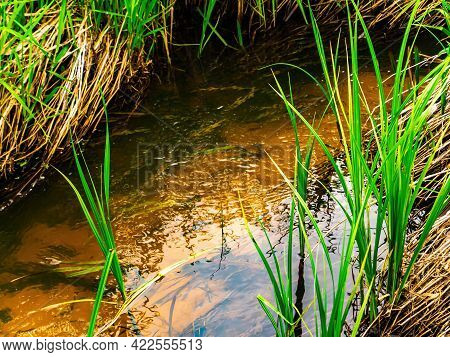 Spring Stream Of River Water With Green Grassy Shore. Freshwater River. Water Flow. Green Grass. The