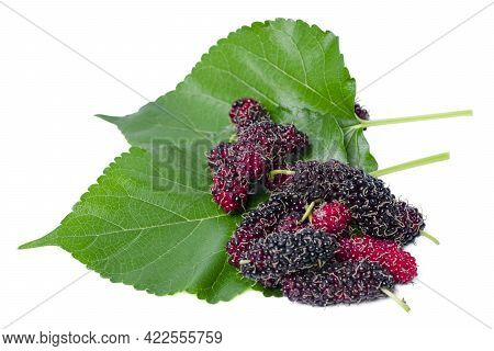 Isolated Mulberry. Top View Organic Mulberry Fruits With Green Leaves Isolated On White Background.