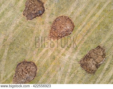 There Are Round, Large Heaps Of Manure In The Field, Aerial Photo. Application Of Organic Fertilizer
