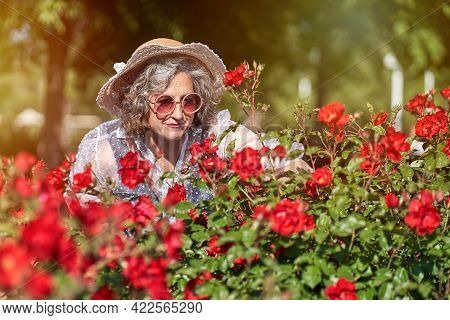 Woman In Hat And Sun Glasses Admiring A Rose Garden